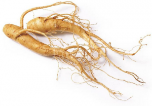PANEX GINSENG EXTRACT